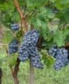 Vinsko Pravo